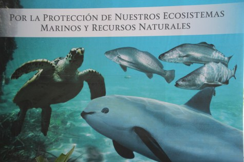 """Backdrop to the ceremonial podium """"For the protection of our marine ecosystems and natural resources"""" depicting sea turtles, totoaba and a vaquita."""